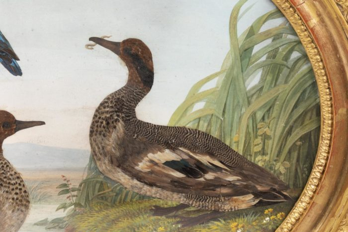 gouache oiseaux canard ver sur terre