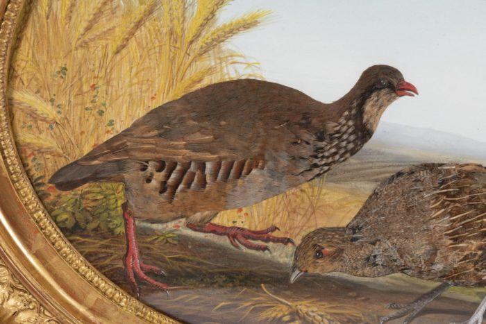 gouache oiseaux perdrix