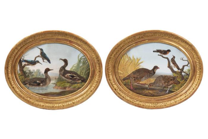 paire gouaches oiseaux plumes prcpl