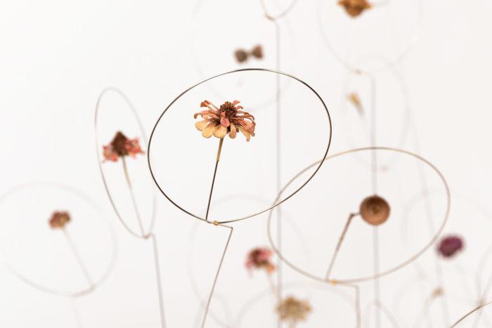 christel sadde automne detail fleur séchée